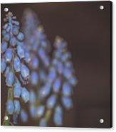 Spring. Acrylic Print