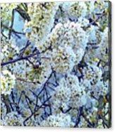 Spring Around Acrylic Print