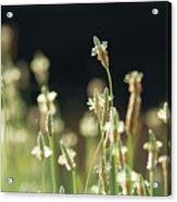 Spring Arrives Acrylic Print