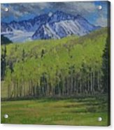 Spring Aspen Acrylic Print