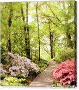 Spring Azaleas  Acrylic Print