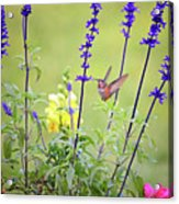 Spring Beauties In The Garden Acrylic Print