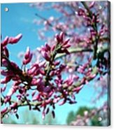 Spring Bliss Acrylic Print