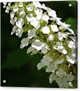 Spring Bloomers 2 Acrylic Print