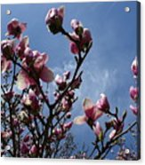 Spring Blooms 2010 Acrylic Print