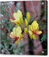 Spring Blooms Yellow Red 052814a Acrylic Print