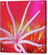 Spring Blossom 19 Acrylic Print