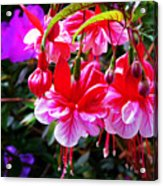 Spring Blossom 6 Acrylic Print