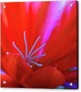 Spring Blossom 8 Acrylic Print