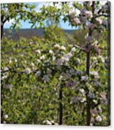 Spring Blossoms Day Acrylic Print