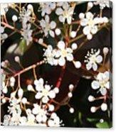 Spring Blossoms Macro Acrylic Print