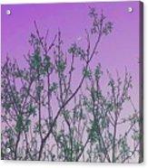 Spring Branches Lavender Acrylic Print
