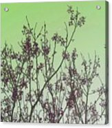 Spring Branches Mint Acrylic Print