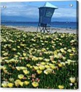 Spring Break Santa Barbara Acrylic Print by Kathy Yates