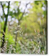 Spring Breeze 3 Acrylic Print