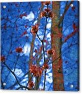 Spring Buds Acrylic Print