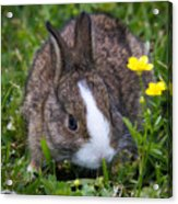 Spring Bunny Acrylic Print