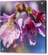 Spring Burst Acrylic Print