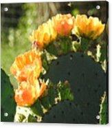 Spring Cactus 14 Acrylic Print
