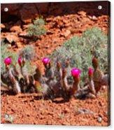 Spring Cactus Acrylic Print