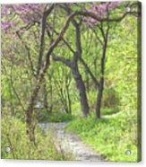 Spring Canopy Acrylic Print