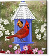 Spring Cardinals Acrylic Print by Crista Forest