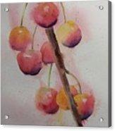Spring Cherries Acrylic Print