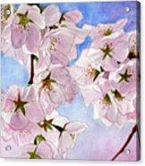 Spring- Cherry Blossom Acrylic Print