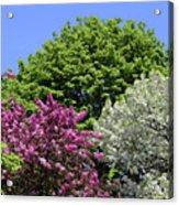 Spring Color 2 051818 Acrylic Print