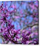 Spring Color Pop Acrylic Print