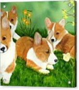 Spring Corgis Acrylic Print
