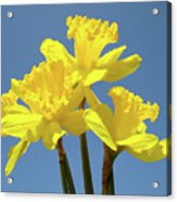 Spring Daffodil Flowers Art Prints Canvas Framed Baslee Troutman Acrylic Print