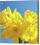 Spring Daffodils Flowers Garden Blue Sky Baslee Troutman Acrylic Print
