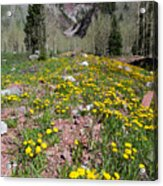 Spring Dandelion And Mountain Landscape Acrylic Print