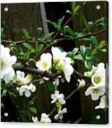 Spring Delight I Acrylic Print