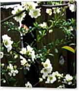 Spring Delight II Acrylic Print