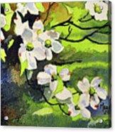 Spring Dogwoods Acrylic Print