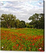 Spring Dreams Are Made Of These Acrylic Print