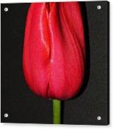Spring Drop  Acrylic Print