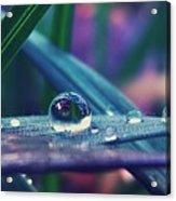 Spring Droplet Acrylic Print
