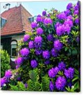 Spring  Dutch Garden  Acrylic Print