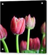 Spring Equinox Acrylic Print by Tracy Hall