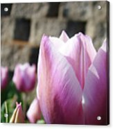 Spring Floral Tulip Flower Baslee Troutman Acrylic Print