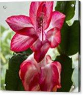 Spring Flower 7 Acrylic Print