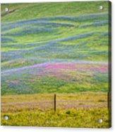 Spring Flower Bloom  Acrylic Print