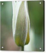 Spring Flower Macro Acrylic Print