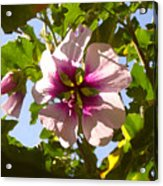 Spring Flower Peeking Out Acrylic Print