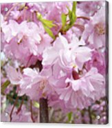 Spring Flowering Trees Art Prints Pink Flower Blossoms Baslee Acrylic Print