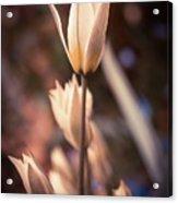 Spring Flowers 2 Acrylic Print