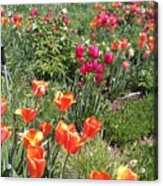 Spring Flowers In A Garden Acrylic Print